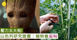 植物會講話?研究證實「壓力太大→會叫出聲」 離5公尺都收到