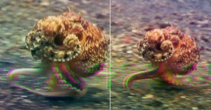 科學家發現「章魚觸手有味覺」...連「你的恐懼」他都聞得到!