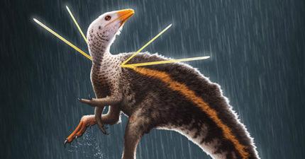 新發現最像「雞」的恐龍 肩上「兩對筷子」有特殊用途!