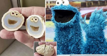 火山岩打開...裡頭住兩隻「餅乾怪獸」!他爽賺28萬