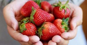 口腔有異物感!驚見「蛀牙裡種出草莓」還發芽 牙醫:有養分