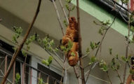 神秘生物「坐樹上2天」她嚇壞求救!動保會一看傻眼:可以吃的
