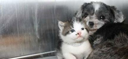 西施犬拯救小貓咪