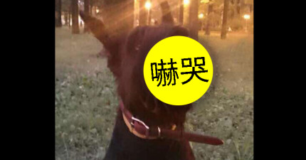 幫你家狗狗戴上這款「超殘暴喪屍狗口罩」去散步,方圓百里內壞人都不敢靠近你。
