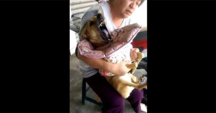 這隻狗狗癲癇大發作時看起來相當危急,但主人接下來為她做的事會讓你含著淚一再重播。