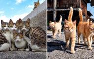 貓奴攝影師拍出「浪浪間最美情感」 「直接咬住頭」來表示有多愛