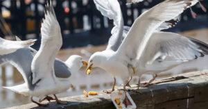 狂男「咬住海鷗」捍衛最愛的麥當勞 警察全程目睹傻眼上銬
