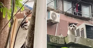 世界最可憐貓「長相衰到心疼」!超哀怨「回頭照」讓牠紅到衣食無缺