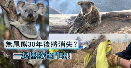 無尾熊將絕種!3個步驟「為牠們找回家園」 小朋友也能做到
