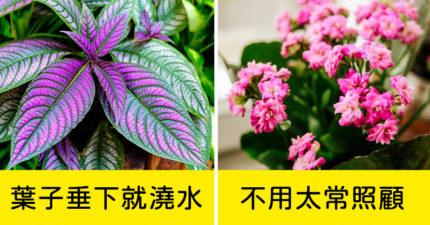 植物殺手免驚!10種適合放家裡的「超好養植物」 「長壽花」漂亮又好顧